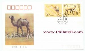 Wild-Camel-China